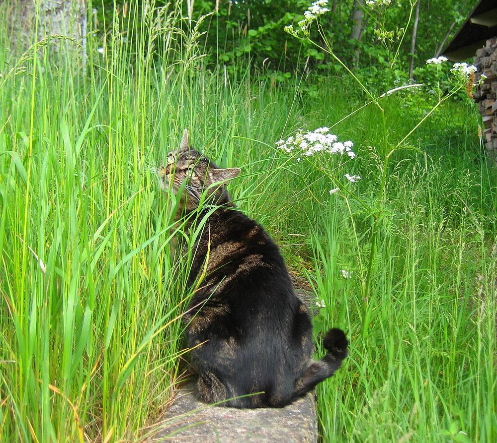 Sybil im Gras